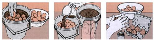 Способы консервирования яиц